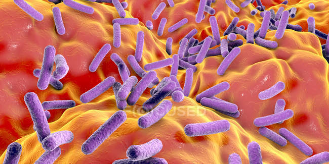 Faecalibacterium prausnitzii bacteria in human gut, digital illustration. — Stock Photo