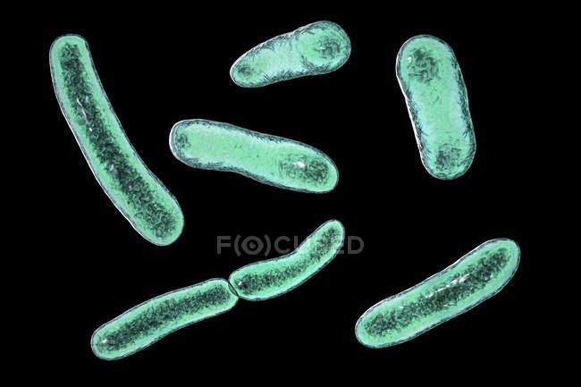 Faecalibacterium prausnitzii bactérias, ilustração digital . — Fotografia de Stock