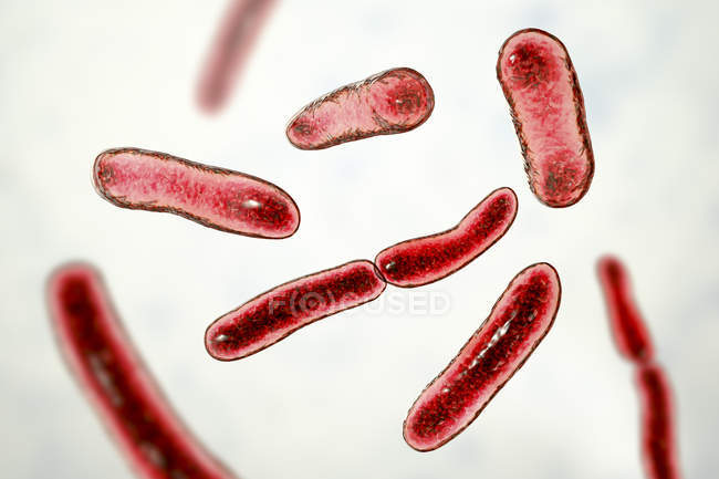 Faecalibacterium prausnitzii bacteria, digital illustration. — Stock Photo