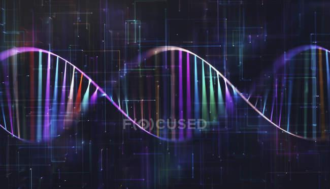 Molécula de ADN multicolor, ilustración digital . - foto de stock
