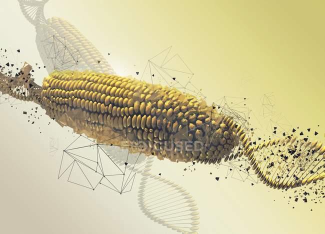 Maíz modificado genéticamente en la mazorca, ilustración digital abstracta . - foto de stock