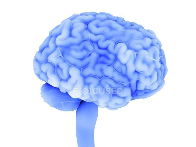 Blue colored human brain, digital illustration. — Stock Photo