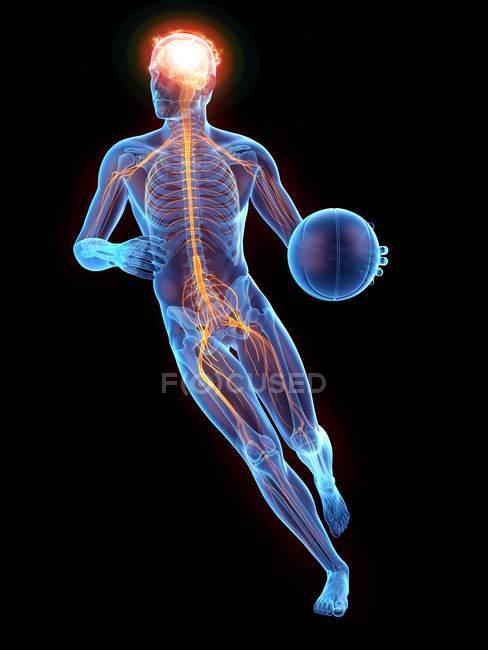 Silhouette humaine jouant au basket-ball avec le système nerveux visible, illustration numérique. — Photo de stock