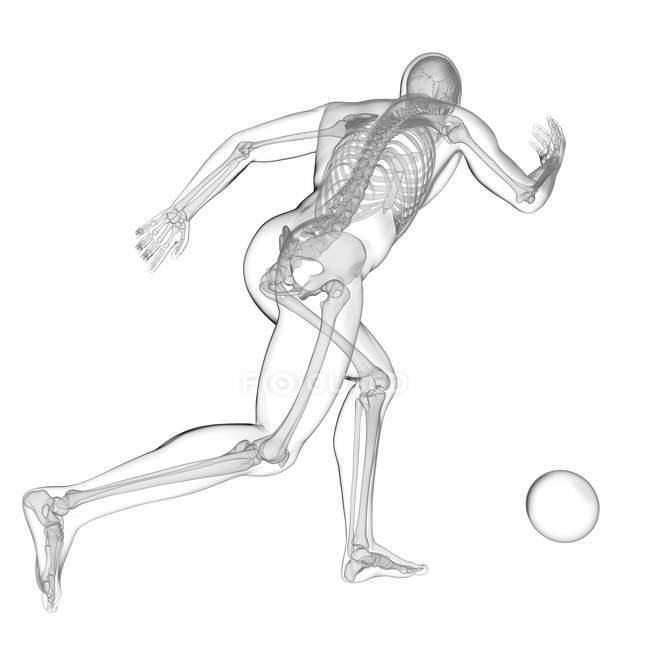 Silhouette humaine jouant au football avec la structure squelettique visible, illustration numérique. — Photo de stock