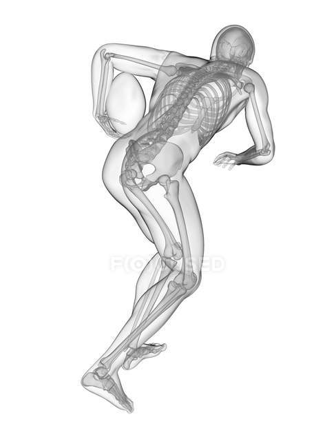Rugby player skeletal system, digital illustration. — стоковое фото