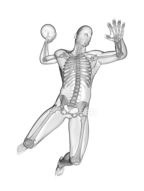 Handball player skeletal system, digital illustration. — стоковое фото