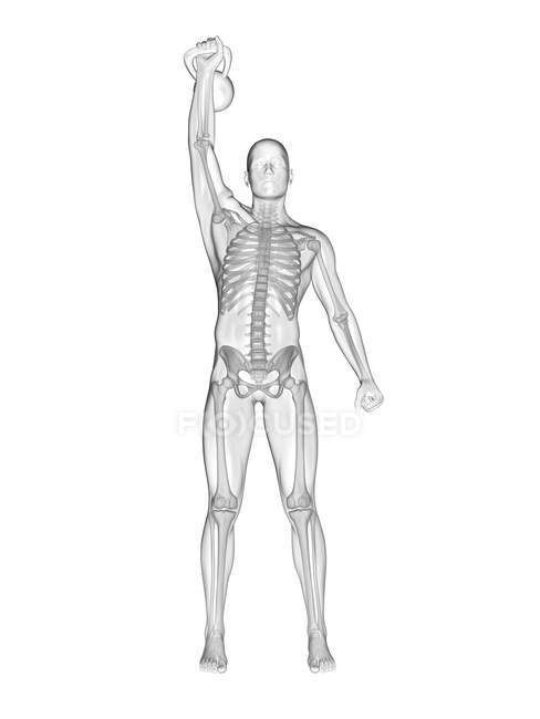 Human silhouette lifting kettle bell with visible skeletal system, digital illustration. — Stock Photo