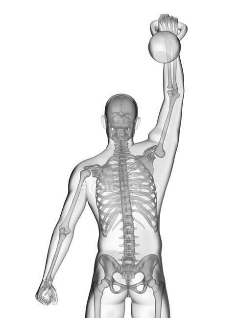 Cloche de bouilloire de levage de silhouette humaine avec le système squelettique visible, illustration numérique. — Photo de stock