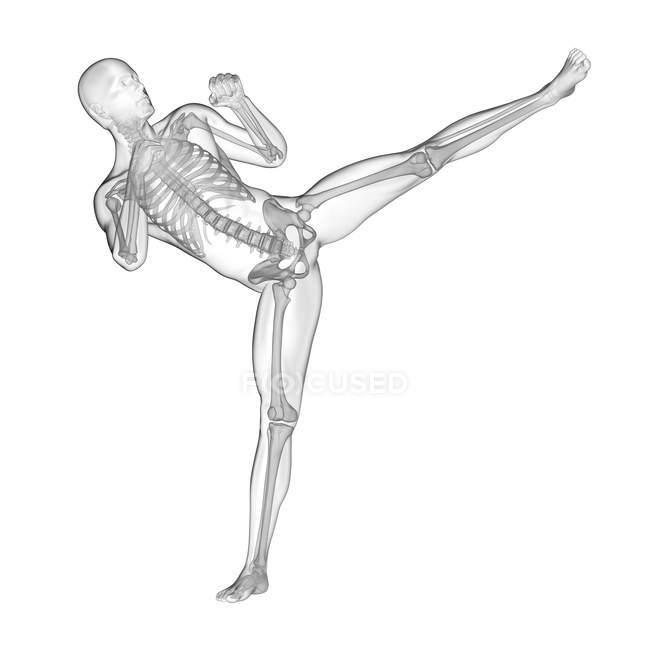 Kickboxing de silhouette humaine avec le système squelettique visible, illustration numérique. — Photo de stock
