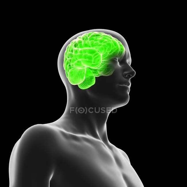 Silhouette humaine avec le cerveau illuminé vert sur le fond noir, illustration numérique. — Photo de stock