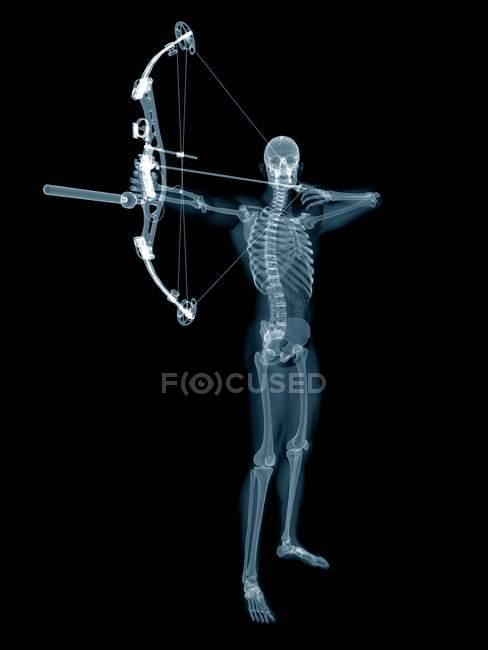 Скелетная структура лучника, цифровая иллюстрация. — стоковое фото