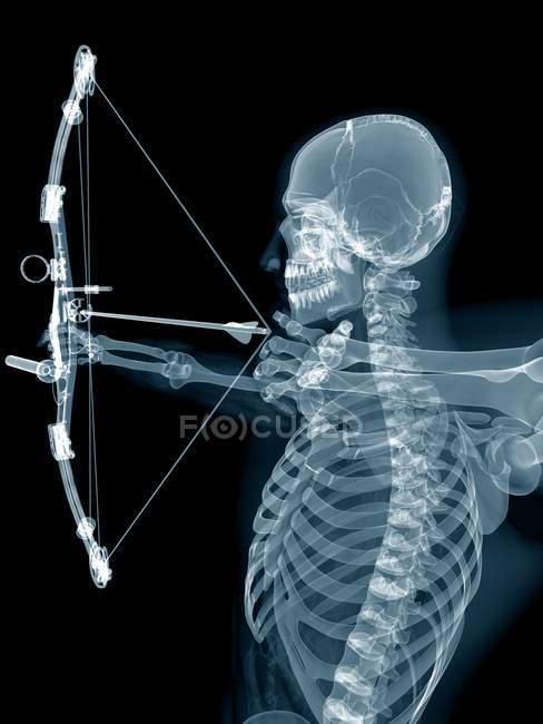 Estructura esquelética del arquero, ilustración digital . - foto de stock