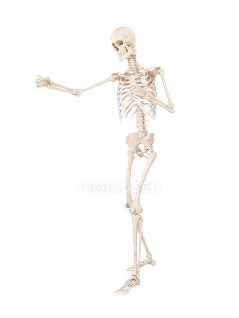 Боксерская скелетная система, цифровая иллюстрация. — стоковое фото