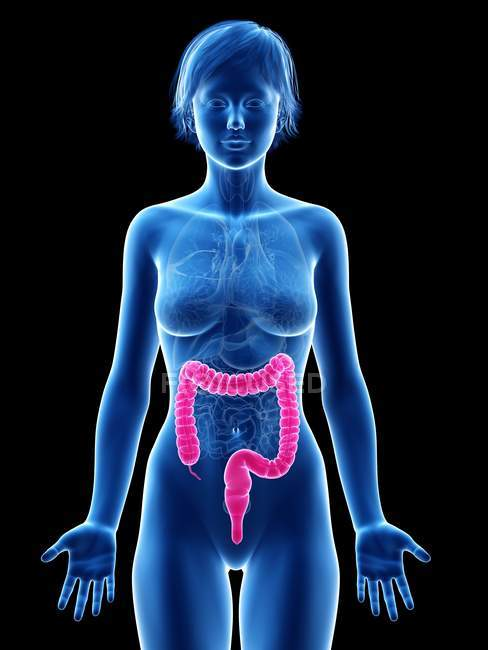 Female silhouette with visible large intestine, digital illustration. — Stock Photo