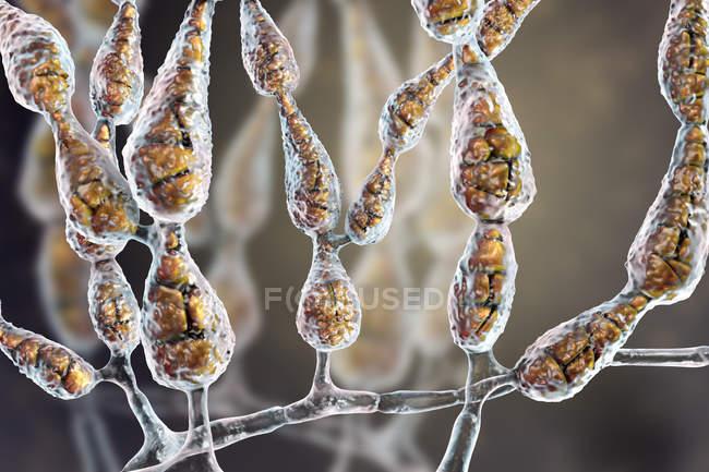 Filamentous dematiaceous allergenic fungus Alternaria alternata, digital illustration. — Stock Photo