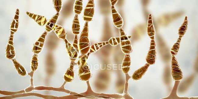 Hongos alergénicos dematiáceos filamentosos Alternaria alternata, ilustración digital . - foto de stock