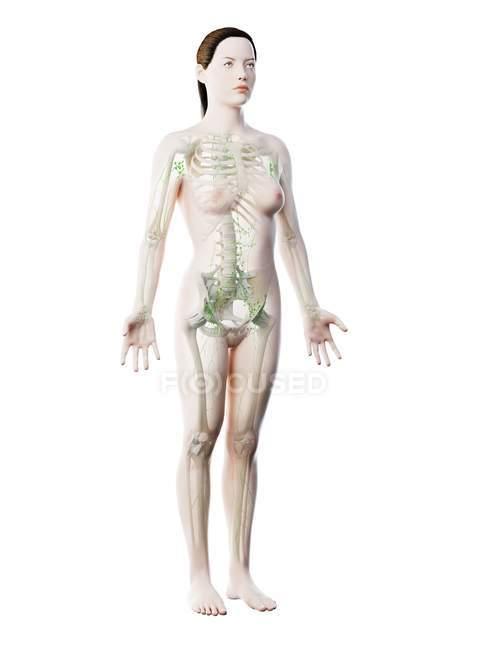 Абстрактная женская модель с видимым скелетом и лимфатической системой, компьютерная иллюстрация . — стоковое фото