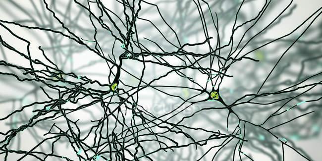 Digitale Illustration pyramidenförmiger Nervenzellen aus der Großhirnrinde. — Stockfoto