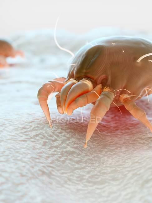 Протипиловий кліщ паразит, Мікроскопічна Цифрова ілюстрація. — стокове фото
