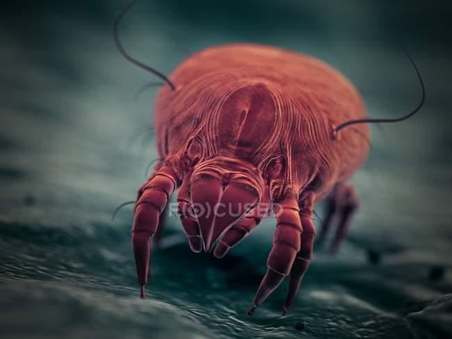 Parásito del ácaro del polvo, ilustración digital microscópica . - foto de stock