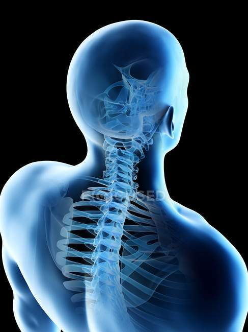 Huesos masculinos abstractos del cuello, ilustración de la computadora . - foto de stock
