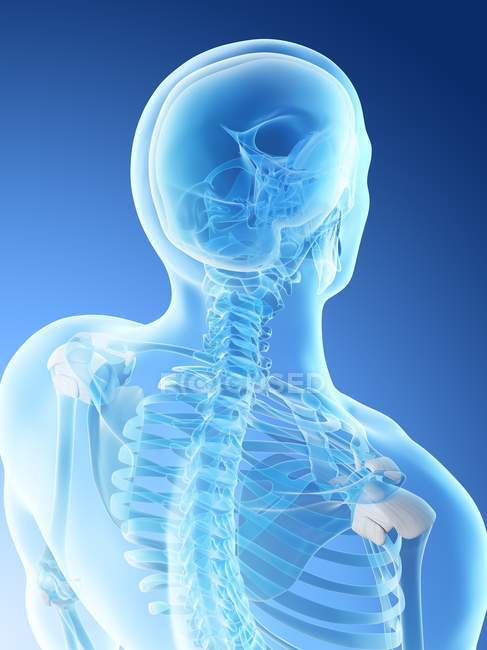 Abstract male neck bones, computer illustration. — Stock Photo