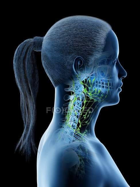 Vista laterale del sistema linfatico femminile di testa e collo, illustrazione digitale . — Foto stock
