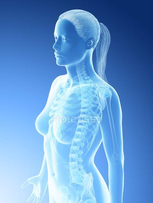 Abstract female thorax bones, computer illustration. — Stock Photo