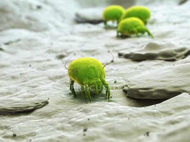 Illustrazione digitale colorata di acari parassiti della polvere . — Foto stock