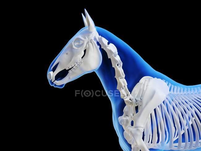 Esqueleto de caballo en silueta transparente sobre fondo negro, ilustración por ordenador . - foto de stock