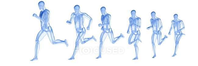 Composite digital illustration of runner with visible skeleton. - foto de stock