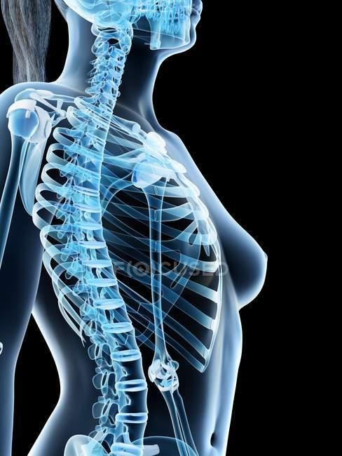 Абстрактные женские грудные кости, компьютерная иллюстрация . — стоковое фото