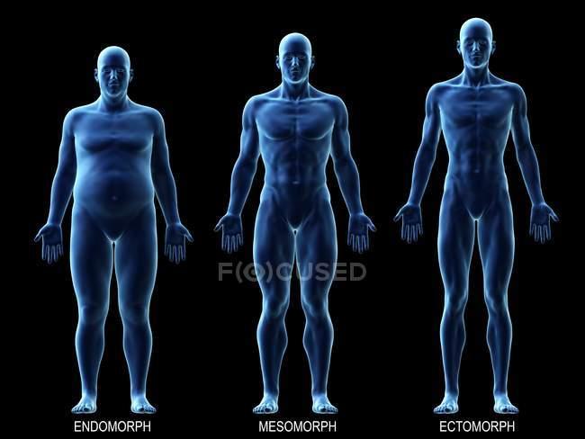 Männlich verschiedene Körpertypen auf schwarzem Hintergrund, Computerillustration. — Stockfoto