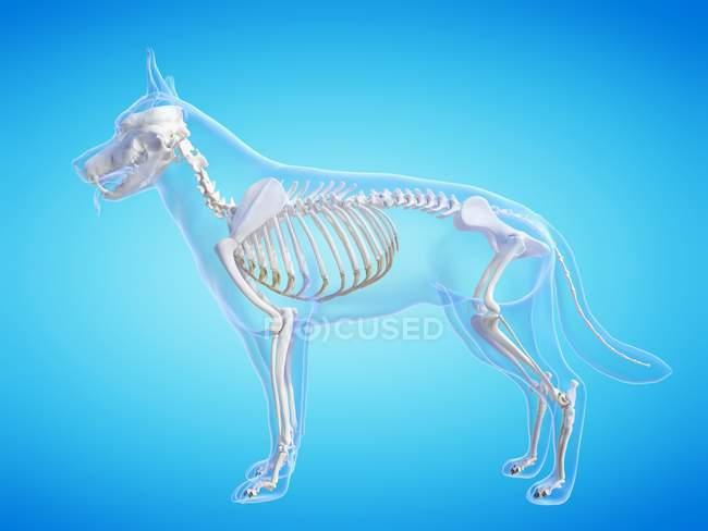 Dog silhouette with visible skeleton on blue background, digital illustration. — Stock Photo