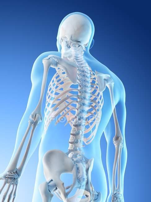 Huesos masculinos abstractos de la parte superior del cuerpo, ilustración por computadora . - foto de stock