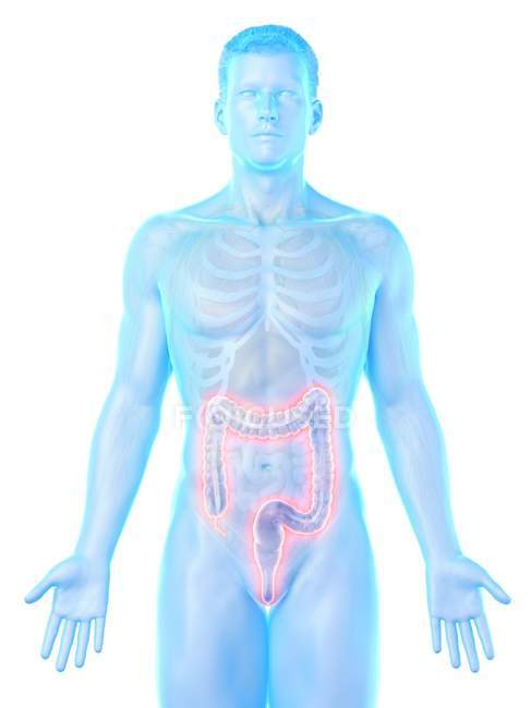 Male silhouette with visible large intestine, digital illustration. — Stock Photo