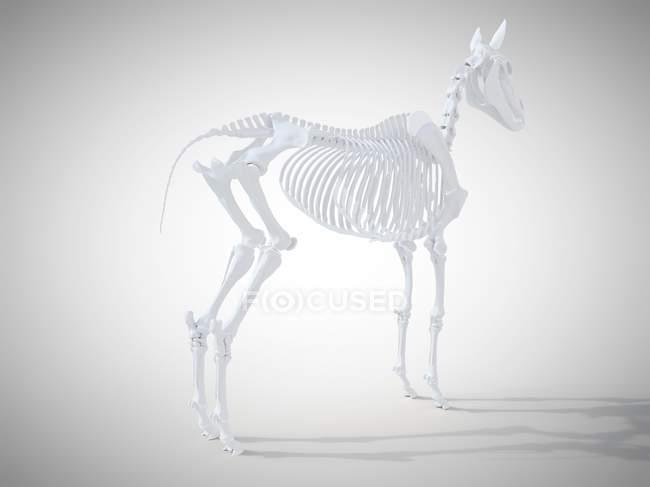 Squelette de cheval, rendu réaliste 3d. — Photo de stock