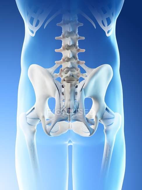 Silueta masculina abstracta con huesos de caderas, ilustración por ordenador . - foto de stock