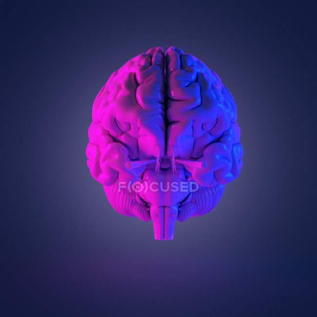 Résumé cerveau humain multicolore, illustration par ordinateur . — Photo de stock