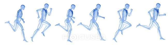 Composite digital illustration of runner with visible skeleton. — Stock Photo