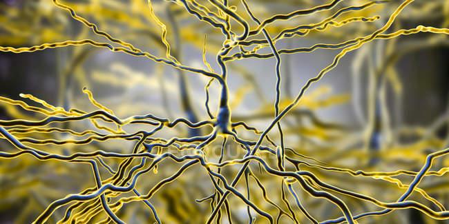 Ilustração digital de células nervosas piramidais do córtex cerebral do cérebro . — Fotografia de Stock