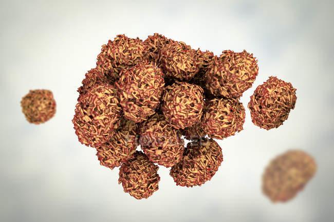 Esporas tóxicas de moho del hongo Stachybotrys chartarum, ilustración digital . - foto de stock