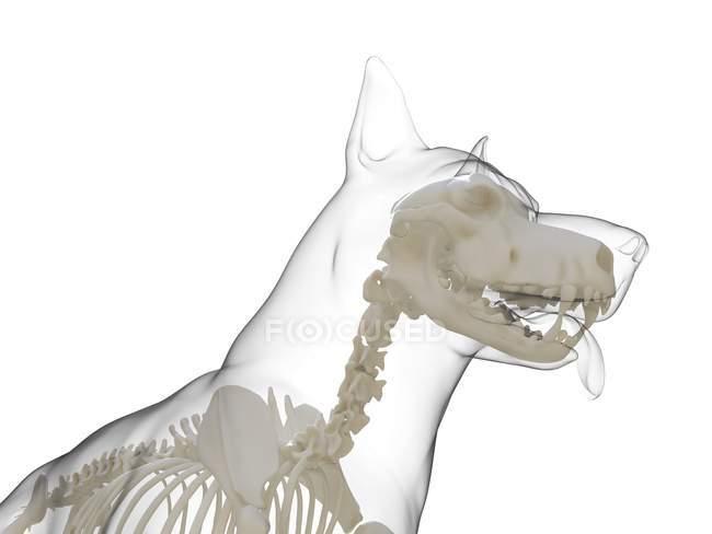 Silueta para perros con esqueleto visible sobre fondo blanco, ilustración digital . - foto de stock