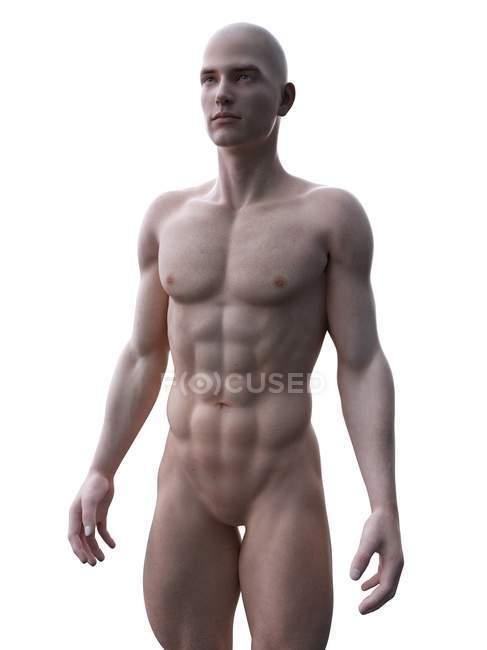 Абстрактний силует мускулистого чоловіка, цифровий приклад. — стокове фото