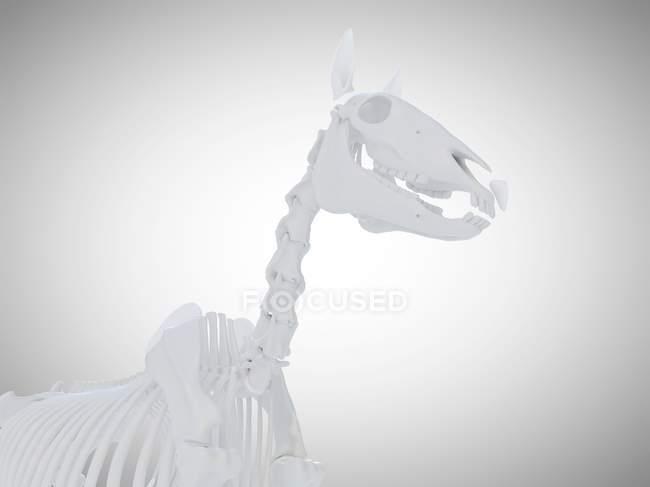 Pferdeskelett, realistisches 3D-Rendering. — Stockfoto