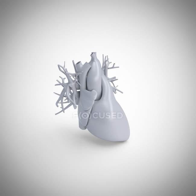 Modelo de corazón humano gris sobre fondo blanco, ilustración por ordenador . - foto de stock