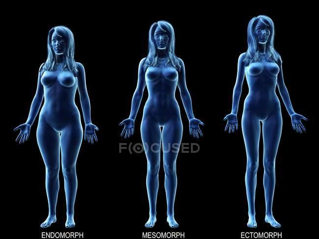 Diferentes tipos de cuerpos femeninos, ilustración digital conceptual . - foto de stock