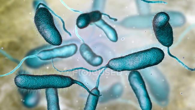 Vibrio vulnificus bacteria found in sea water, colored computer illustration. — Stockfoto