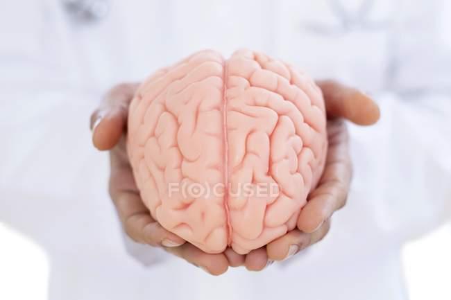 Neurólogo sosteniendo modelo cerebral en las manos, primer plano . — Stock Photo