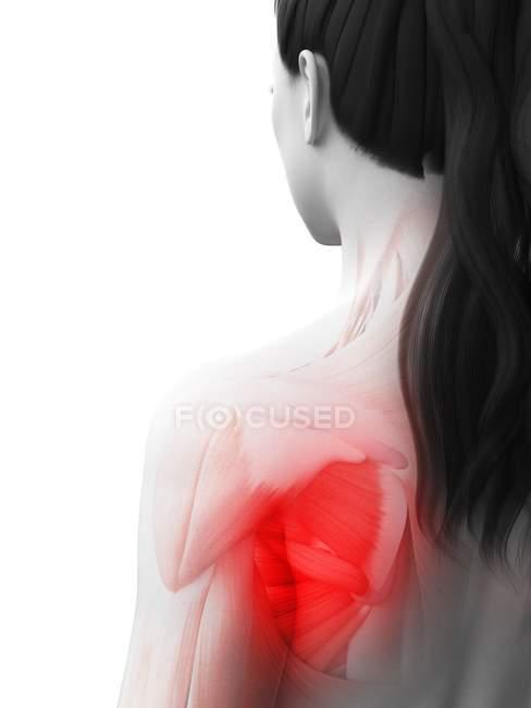 Абстрактний жіночий організм з болем плеча, концептуальна комп'ютерна ілюстрація. — стокове фото